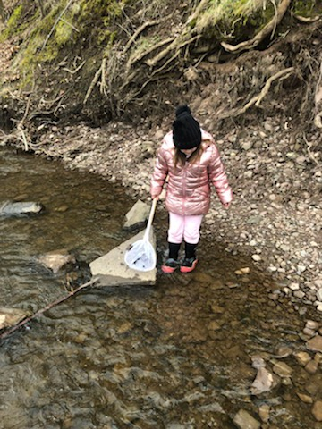 Elementary student holding a net searching for aquatic creatures in a creek