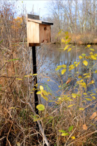 Bird house near waterway